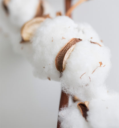 Textiles without genetic engineering - with this concern, more and more consumers are turning to organic cotton and are happy to accept higher prices for it. © Hohenstein